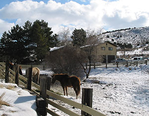Horses in the foreground of a rustic house and multi-acre property